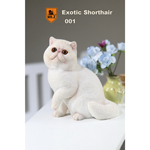 Exotic Shorthair Cat (White)