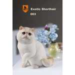 Exotic Shorthair Cat (Beige)